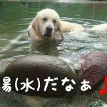 水泳の苦手なワンちゃんが水に浸かってのんびり〜(´ε` )