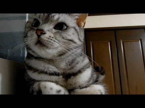 窓を開けてほしんだにゃ・・・!日本の夏の暑さも猫ちゃんには伝わらない(´ε` )