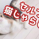 自分の尻尾をくるくる追いかける猫ちゃんが可愛すぎる!