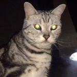 夜の撮影で猫ちゃんの目がキラーン!