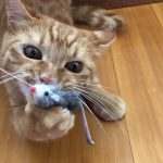 ネズミのオモチャを絶対に離してくれない猫ちゃんが必死過ぎる!♡