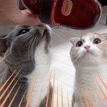 猫ちゃんが魔法のブラシにメロメロ〜♡