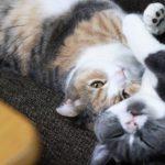 お顔をふみふみする猫ちゃん(*´ω`*)