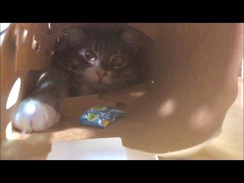 猫ちゃんがトンネルに挟まっちゃった!?脱出成功なるか?♡
