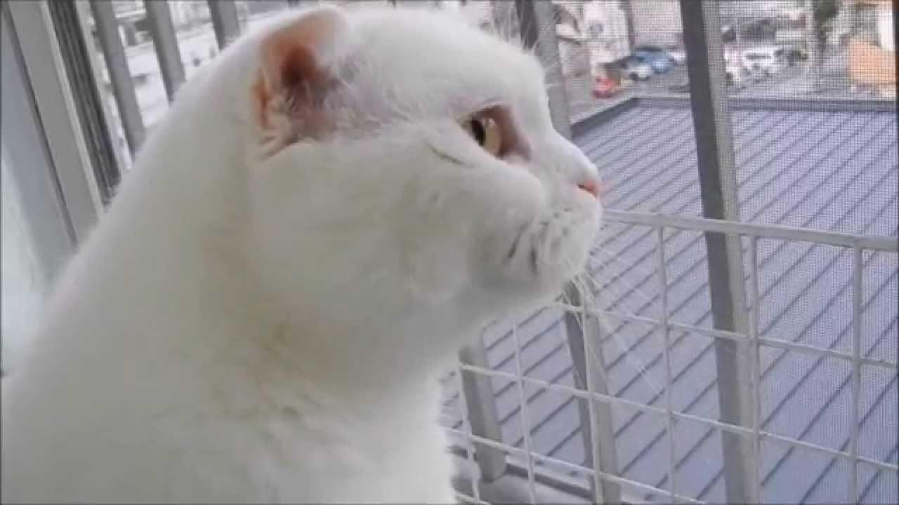 猫ちゃんの綺麗すぎる横顔にキュン♡
