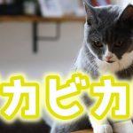 可愛い!気持ちよすぎるブラッシングにメロメロな猫ちゃん♡