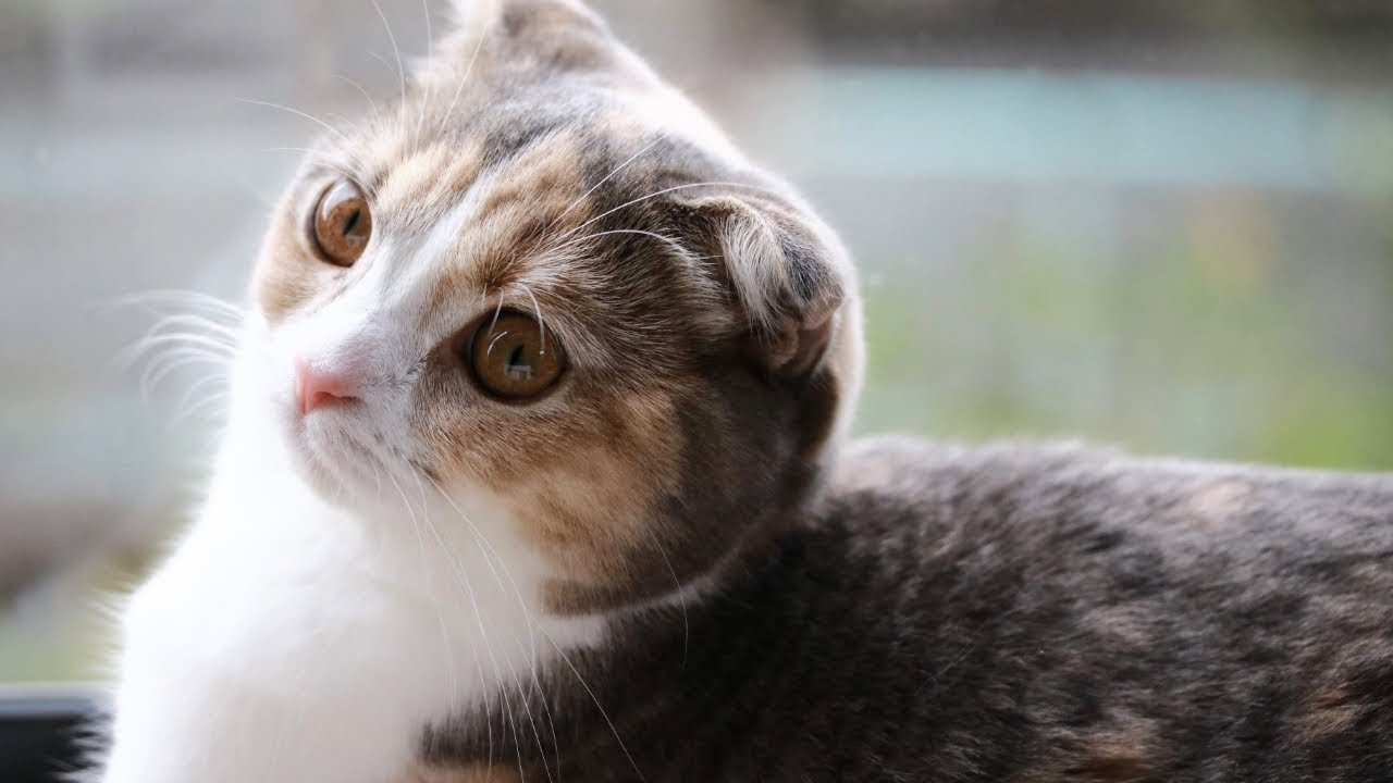 子猫を怒るつもりだったのに可愛すぎて叱れない〜♡