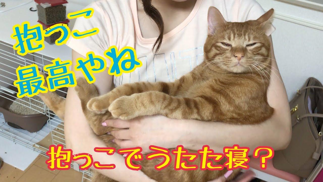 赤ちゃんのように抱っこされる甘えん坊なモフモフ茶トラちゃんがかわいすぎる♡