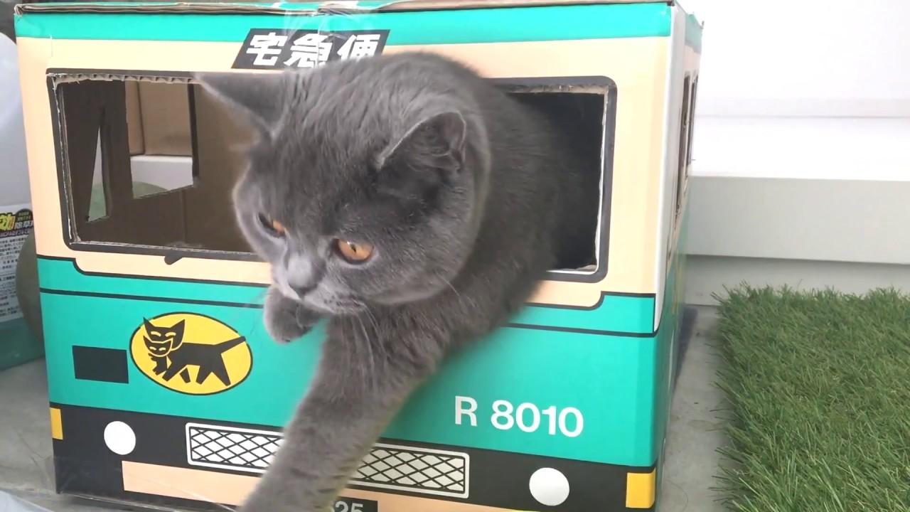 猫用トラックで遊ぶ猫ちゃんが可愛すぎる〜♡