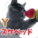 手作りスケスケ猫ちゃんベッドが超素敵・・・!♡