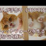 スケスケなキャットウォークに猫ちゃんたちが大喜び♡