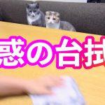 机拭きに合わせて猫ちゃんたちのお顔が右へ左へ連鎖してカワイイ♡