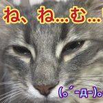 眠気と戦うウトウト子猫ちゃんにキュンとしないはずがない件♡