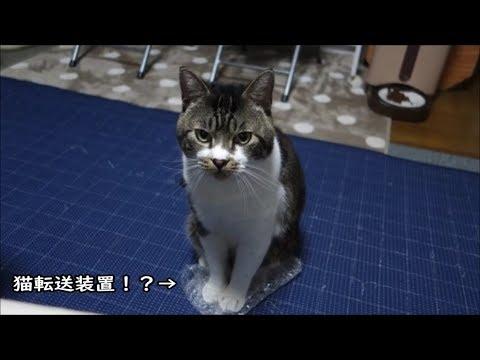 プチプチを座布団代わりにしてご機嫌な猫ちゃんが可愛すぎて無理♡!
