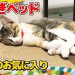 爪とぎベットでウトウトな子猫ちゃんに癒やされる〜♡