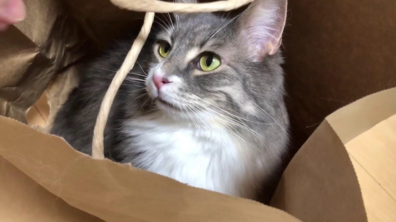 頭隠して尻隠さず?紙袋からちらりと覗くカワイイ猫ちゃん♡
