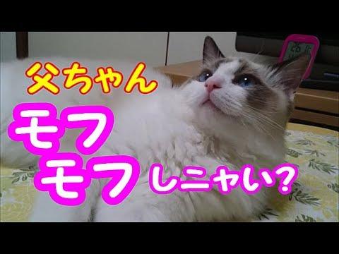おとなになっても甘えん坊なモフモフ猫ちゃんに癒やされちゃう〜♡