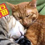 キュートな猫ちゃん二匹仲良く添い寝する姿が可愛すぎる!!♡