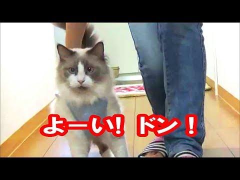 飼い主さんとかけっこをしてたけど・・・?ふてくされる猫ちゃんにキュン♡