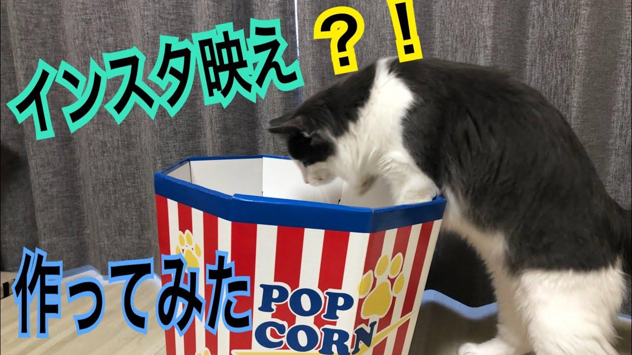 ポップコーンボックスからひょっこりな猫ちゃんが可愛すぎる♡