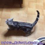 ぴょこりんっと飛ぶ猫ちゃんのジャンプが可愛すぎる!!