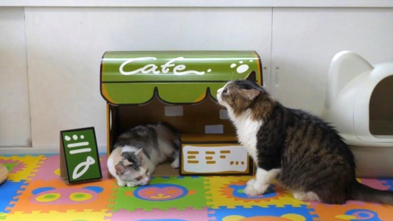 猫ちゃんによる猫ちゃんのための猫カフェ!一家に一個欲しい件(*´ω`*)