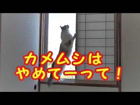 猫ちゃんVSカメムシ!勝負のゆくえは??