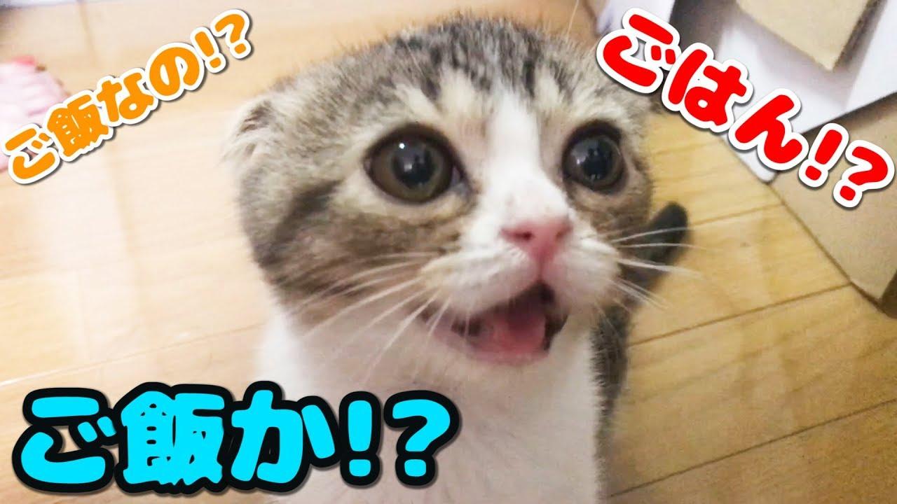 ご飯が欲しくて子猫ちゃんがおねだりしたよ♡