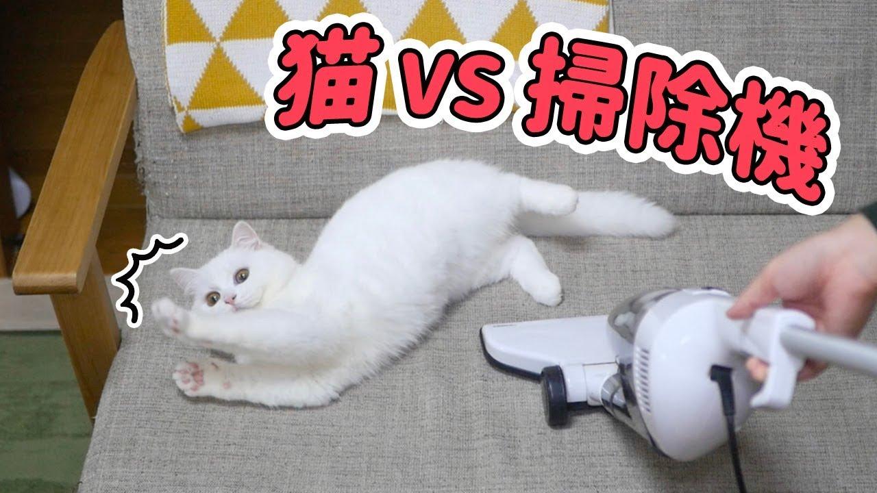 猫ちゃんがお掃除中にじゃれる姿に萌え〜♡