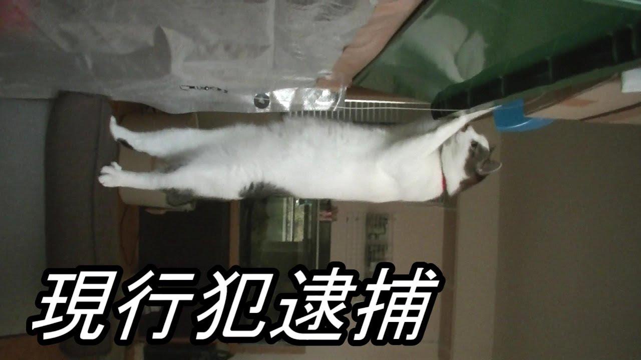怪しい猫ちゃんを発見!オモチャがほしくて・・・
