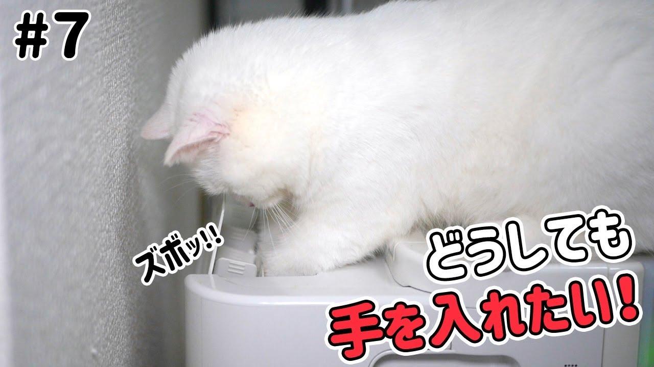空気清浄機がどうしても気になる猫ちゃん♡