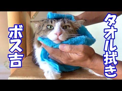 タオルでさっぱりキレイキレイな猫ちゃん♡