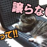 猫ちゃんたちが椅子をめぐってハチャメチャ大乱闘!?