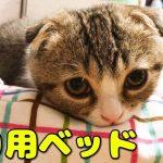 猫ちゃんベッドでくつろぐ小さな子猫ちゃんが超キュート♡