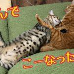 二匹の猫ちゃんが抱き合ってスヤスヤする姿にキュンっ♡