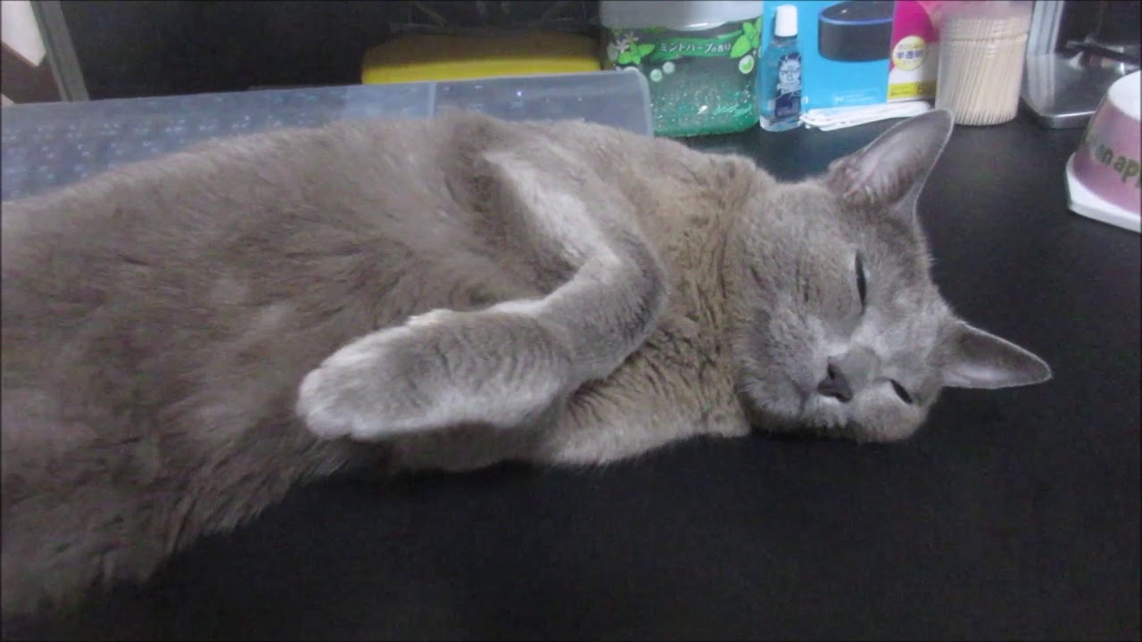 猫ちゃんの可愛い大いびきに思わず笑っちゃう!♡