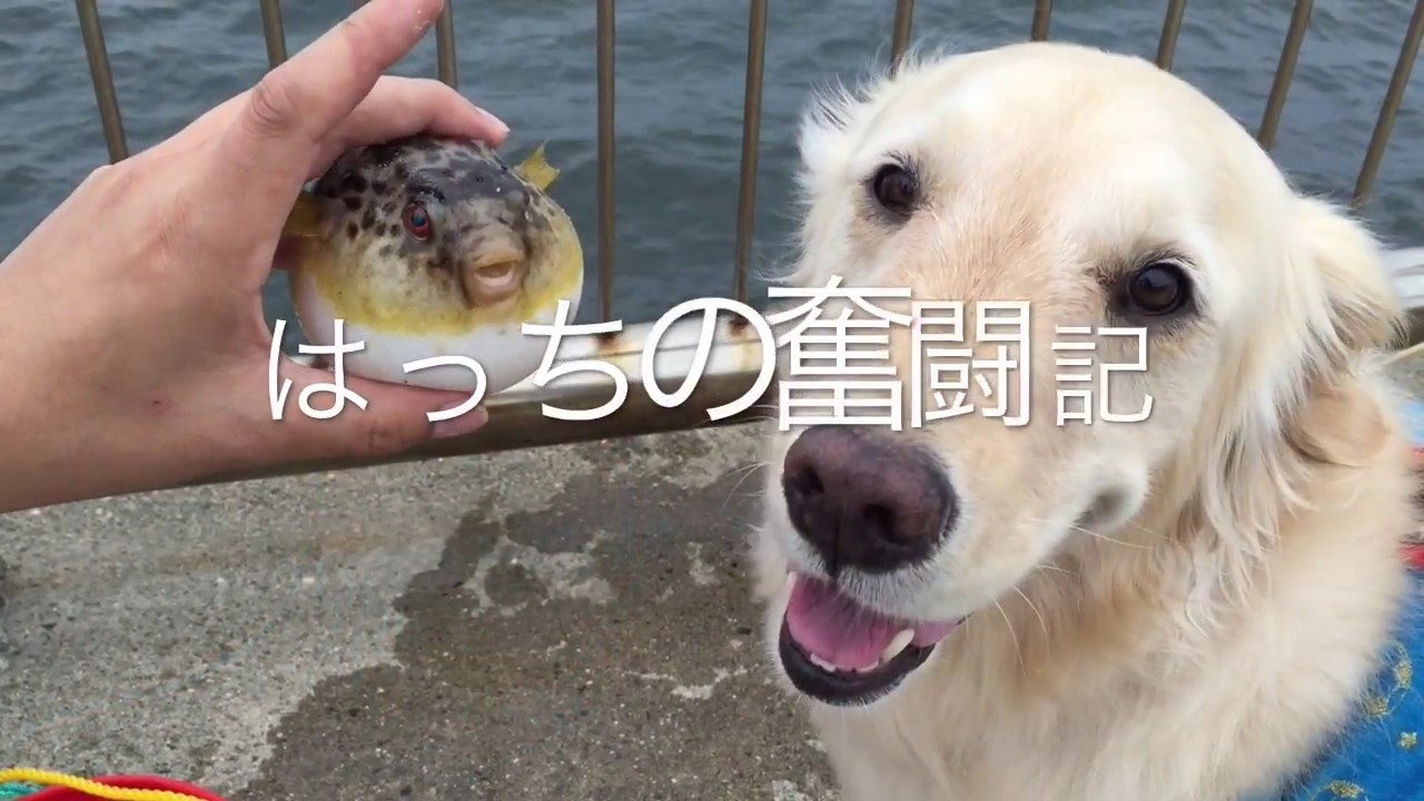 ワンちゃんと一緒に魚釣り!が羨ましすぎる〜♡