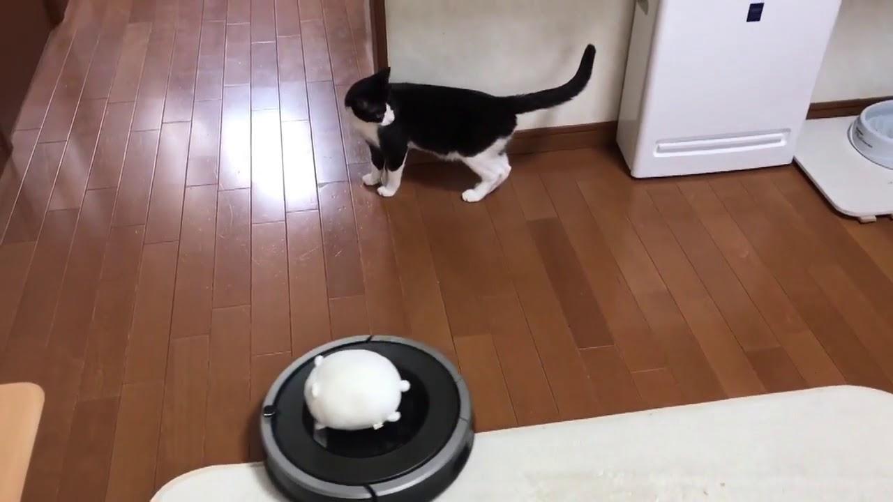 猫ちゃんがルンバに乗ってスーイスイッ♡