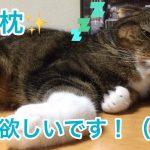枕があると落ち着くの♡な可愛い猫ちゃん