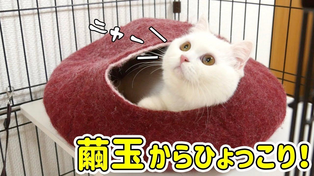 繭玉がお気にいりな真っ白猫ちゃんが可愛すぎる♡