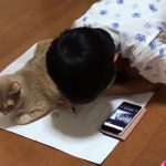 いつでも一緒な男の子と猫ちゃんがまるで兄弟みたいで可愛すぎる♡