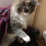 飼い主さんが触ろうとすると「ちょっと・・・」と手を押さえる猫ちゃん♡