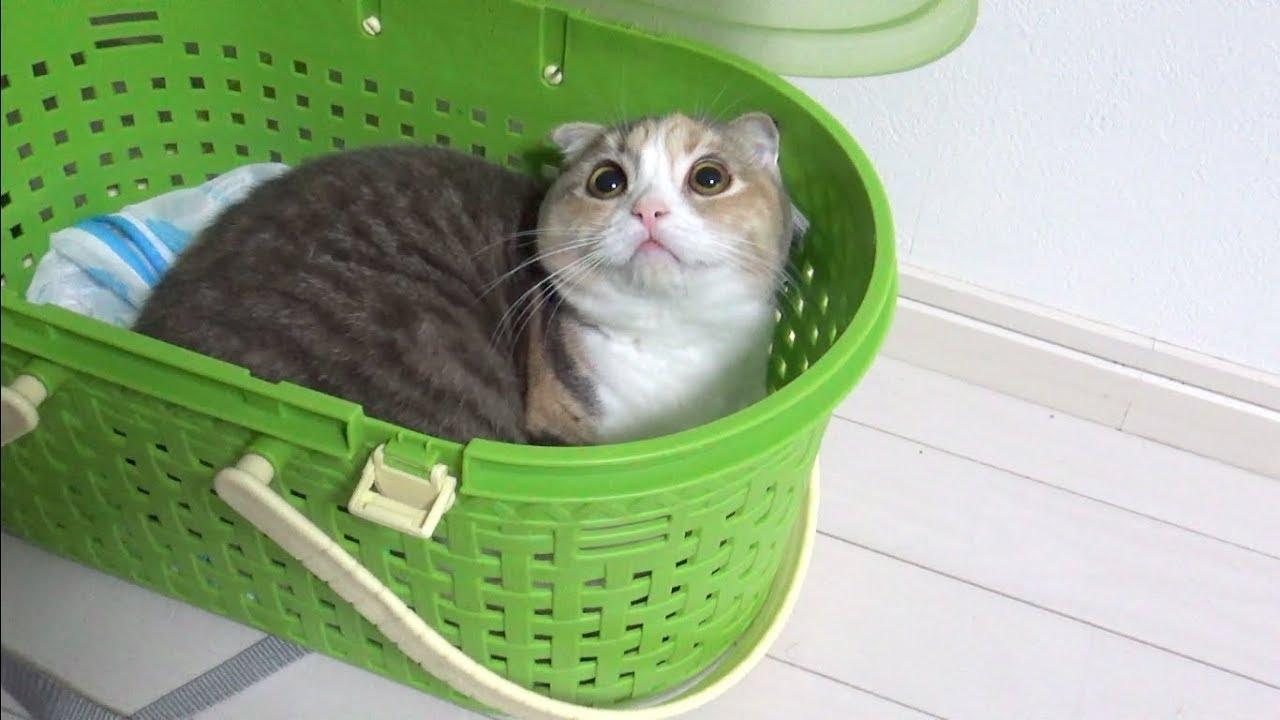 キャリーにすっぽり!箱入り娘ならぬ箱入りニャンコが可愛い〜♡
