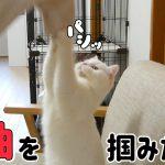 飼い主さんのお袖が気になる・・・!かわいい猫ちゃん♡