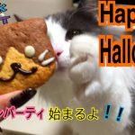 猫ちゃんもハロウィンを一緒に楽しんだようです♡アイデアハロウィンプレート