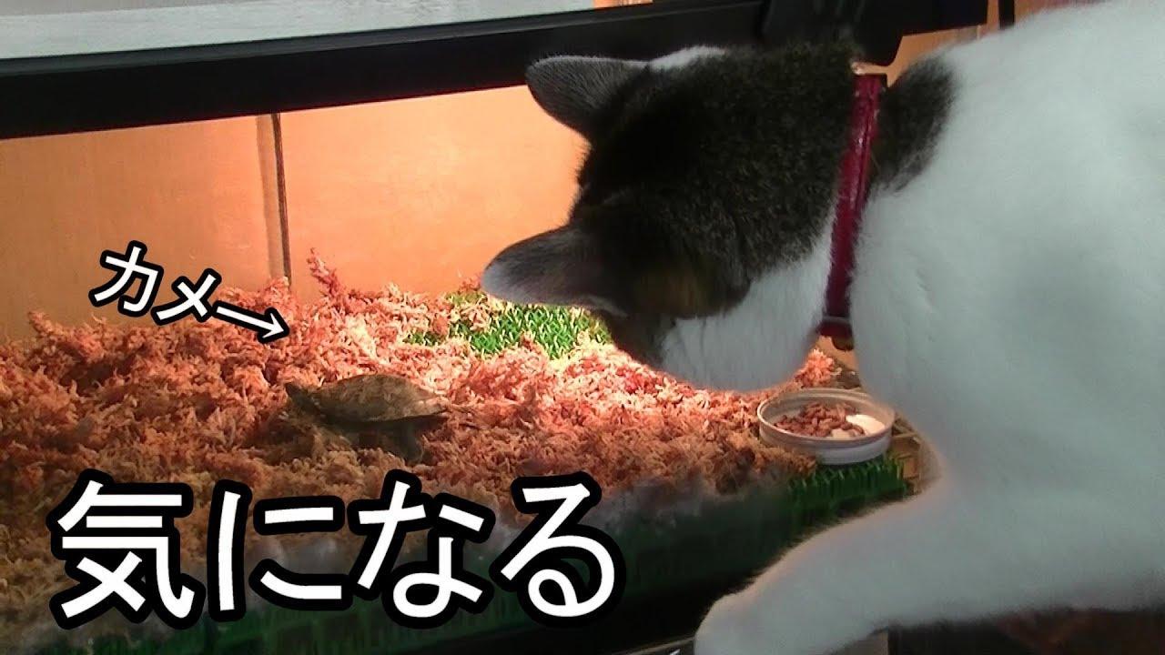亀さんはじめましてな猫ちゃん♡