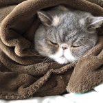 毛布にくるまる猫ちゃんにキュン死に♡