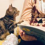 本を読もうとすると邪魔する子猫ちゃんが可愛すぎてツライ・・・!(´・ω・`)