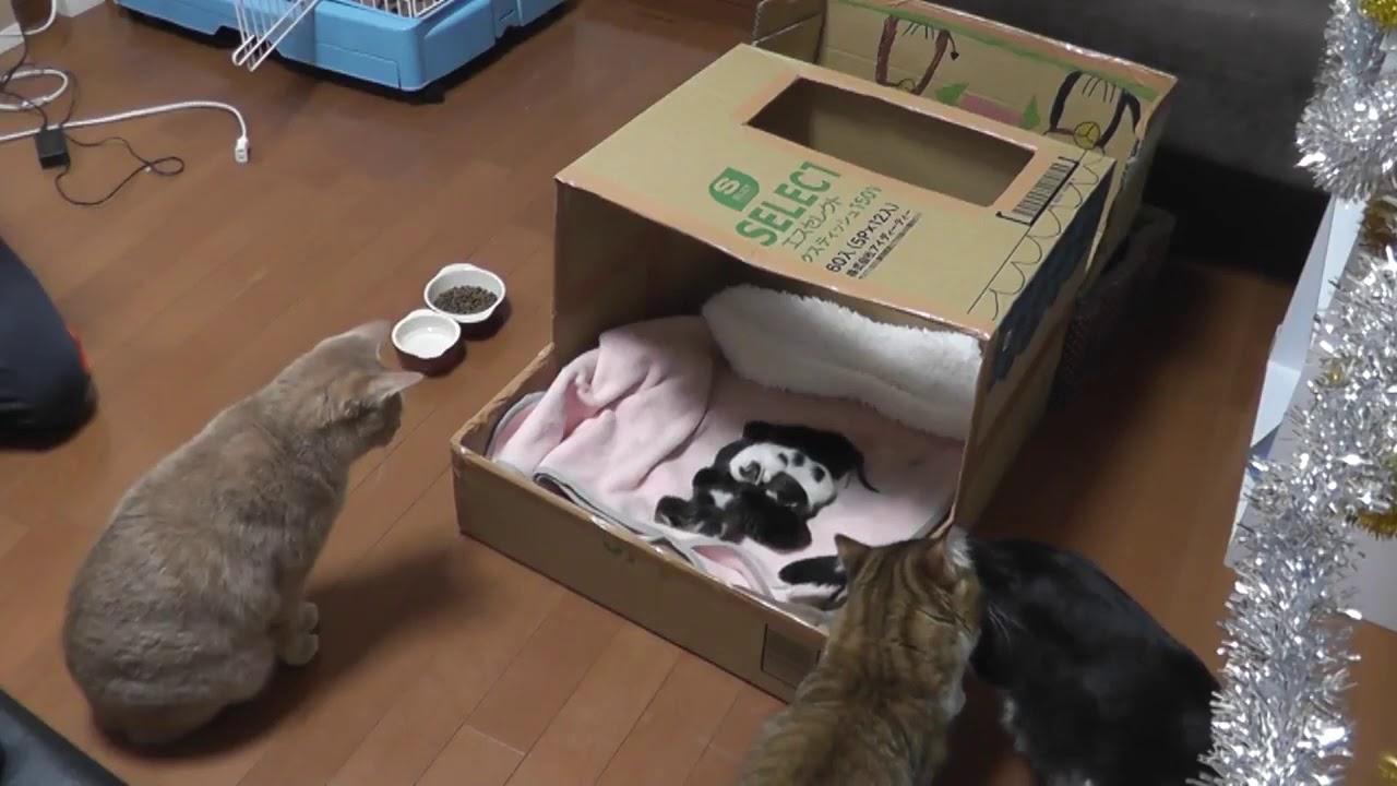 感動!子猫ちゃんと初対面のパパ猫さん♡