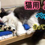 アウト?セーフ?猫ちゃん用ベッドからはみ出しそうな猫ちゃんが可愛すぎる!!